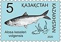 Alosa Kessleri Volgensis 2020 Stamp of Kazakhstan.jpg