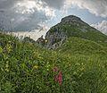 Alpenrosen im Hintergrund Schibengütsch.jpg