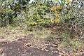 Alto Araguaia - State of Mato Grosso, Brazil - panoramio (1158).jpg