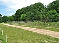 Amazona - view along the boundary fence - geograph.org.uk - 838979.jpg