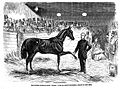 American horse trainer, 19th century. Wellcome L0000425.jpg