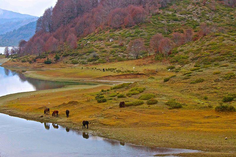 File:Amos Springs Lake Pindus Horses.jpg