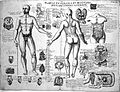 Anatomical sketches, Valverde; anatomy, early 17th century. Wellcome L0011863.jpg