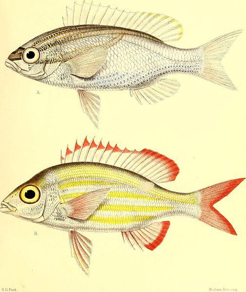 File:Andrew Garrett's Fische der Südsee (1873) (18007639508).jpg
