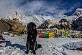 Annapurna 2018 2.jpg