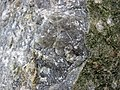 Anorthosite xenolith (anorthosite series, Duluth Complex, Mesoproterozoic, 1099 Ma; Keene Creek East Skyline Parkway roadcut, Duluth, Minnesota, USA) 1 (22215437182).jpg