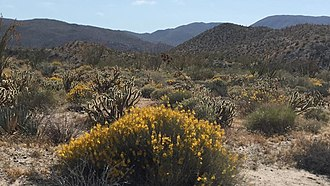 National Register of Historic Places listings in San Diego County, California - Image: Anza Borrego Superbloom