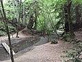 Aptos Creek - panoramio.jpg