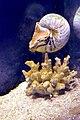 Aquarium de Barcelona (9247765174).jpg