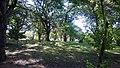 Arboleda - panoramio (1).jpg