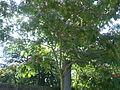 Arboretum Gaston Allard 5.JPG