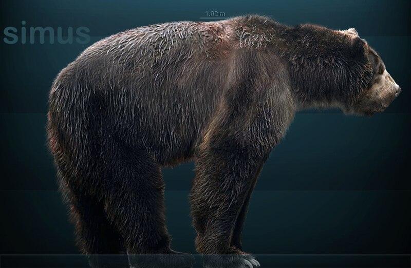 L'ours à face courte (Arctodus simus)