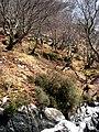Ardnish landscape - geograph.org.uk - 1256315.jpg