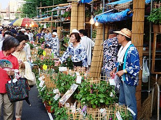 Ipomoea nil - The Iriya Morning Glory Market, Tokyo (2008)
