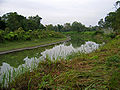 Assam 028 yfb edit.jpg