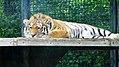 Assiniboine Park Zoo, Winnipeg (480541) (25014379371).jpg
