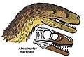 Atrociraptor restoration.JPG