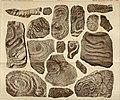 Atti della Società italiana di scienze naturali (1887) (20162009219).jpg