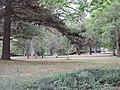 Audubon Park New Orleans 7 April 2020 - 11.jpg