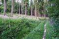 Augustdorf - 2014-06-13 - LIP-066 - Digitalis purpurea (02).jpg