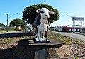 Australian Braford Beef City Rockhampton.jpg