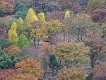 Autumn Colours in central Tokyo (31334237094).jpg