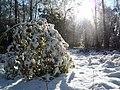 Autumn Snow (2985260298).jpg