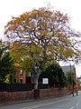 Autumnal Colour - Holydyke, Barton Upon Humber - geograph.org.uk - 1546389.jpg