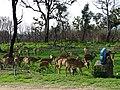 Bandipur Tiger Reserve, Karnataka DSC00708.JPG