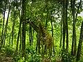 Bangabandhu Sheikh Mujib Safari Park-1.jpg