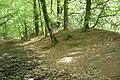 Bank and ditch, Castle Dyke, Little Haldon - geograph.org.uk - 1327106.jpg