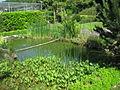 Bassin de jardin 0002.jpg