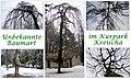 Baum mit Fragezeichen in Kreischa.jpg