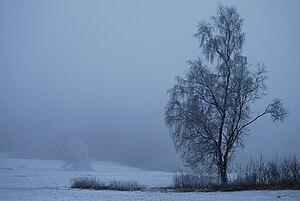 Das Bild 'Baumundnebel' wurde im oberfränkischen Sauerhof, Deutschland, aufgenommen.