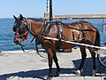 Bay carriage horse in Chania, Creta.jpg