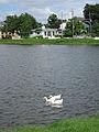 Bayou St John Ducks.JPG