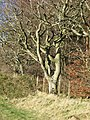 Beech, Blackburn - geograph.org.uk - 352288.jpg