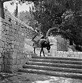 Beladen ezel op een trap die tegen een heuvel is aangelegd, Bestanddeelnr 255-4251.jpg