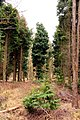 Bernwood Forest - geograph.org.uk - 1743501.jpg