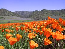 Berryessa Snow Mountain National Monument.JPG