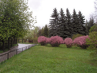 Irkutsk Oblast - Spring time at the Irkutsk Botanic Garden. The pink blooming bushes in the middle are a relic plant, Amygdalus pedunculata Pallas. Picea pungens Engelm trees are seen in the backdrop.