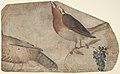 Bird Eating Grapes (recto); Tigress (verso) MET DP809962.jpg