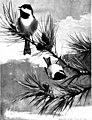 Bird portraits (1901) (14751866185).jpg