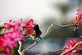 Birdy 10869678.jpg