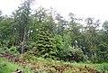 Birk's Plantation - geograph.org.uk - 1336319.jpg