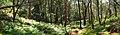 Birrawanna Track - panoramio (1).jpg