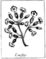 Black and White Flowers (Cowslips).png