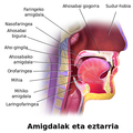 Blausen 0861 Tonsils&Throat Anatomy2-eu.png