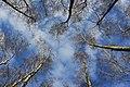 Blick in den Himmel..IMG 6410OB.jpg