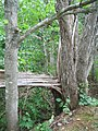 Bloomfield Provincial Park IMG 8279 (1849059914).jpg